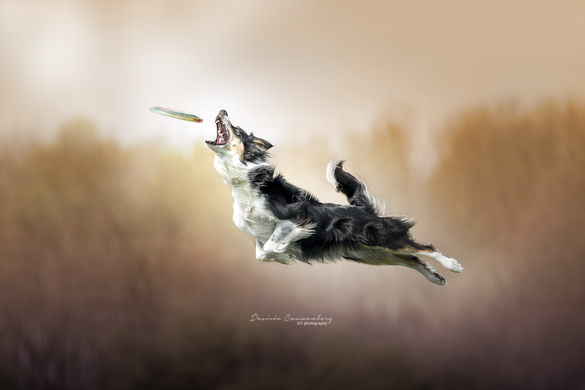 flyingdog DCphoto.nl
