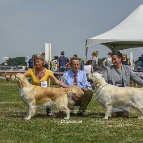 Golden Retriever keuringen Dogshow DE BARONIE