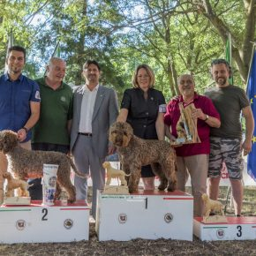 Raduno Lagotto Romagnolo  C.I.L. 23 juni 2018 Imola (Italy)