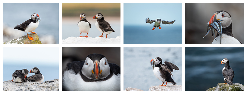 Puffin Gallery