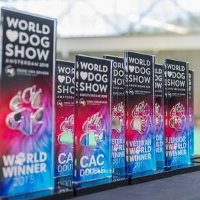 Lagotto Romagnolo by World Dog Show 2018