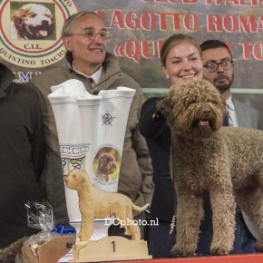 Raduno Lagotto Romagnolo C.I.L. Bagno Di Romagna  12-13 oct 2018